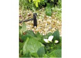 0 - 40 lph Adjustable Mini Sprinkler On Stake - (Contains 5)